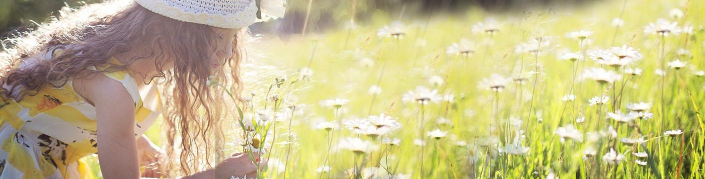 Sommereng. Foto: pixabay.com